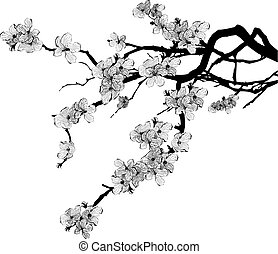 vector illustration of branch of cherry tree in black and white colors (EPS 10)