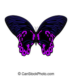 Vector illustration of butterfly