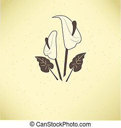 Vector illustration of calla lilies
