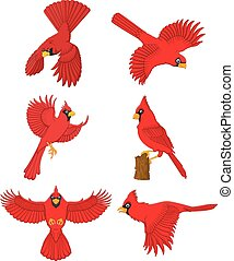 Cardinal cartoon set - Vector illustration of Cardinal...