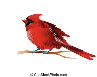 Vector illustration of cardinal - Vector illustration of red...