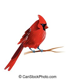 Vector illustration of cardinal - Vector illustration of red...