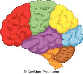 Cartoon colorful brain - Vector illustration of Cartoon...
