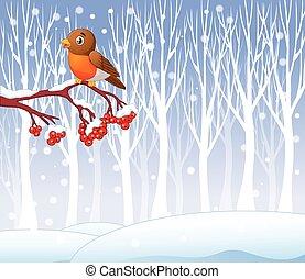 Cartoon funny robin bird