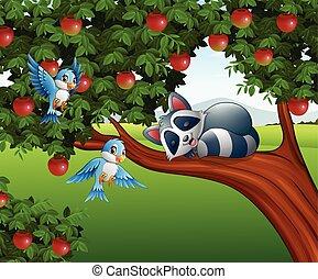 Cartoon raccoon sleep on the apple