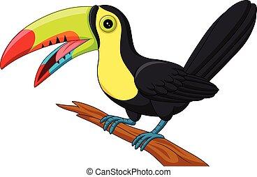 Cartoon toucan bird isolated on white background