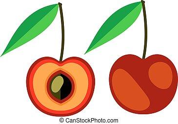 Vector illustration of cherry
