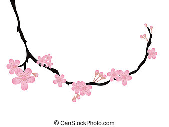 branch with flowers in bloom - Vector illustration of cherry...
