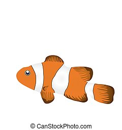 fish - Vector illustration of clownfish isolated on white...