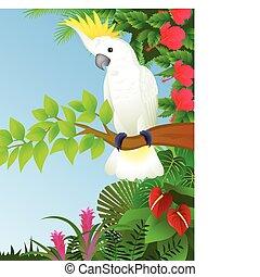 Vector illustration of cockatoo bird