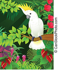 Vector illustration of cockatoo bird