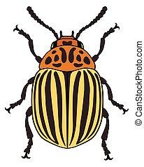 Vector illustration of colorado potato beetle