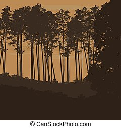 Vector illustration of coniferous forest with tall trees beneath an orange sky with clouds