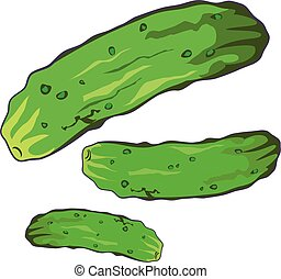 Vector illustration of Cucumber on white background