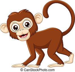 Cute baby monkey on white background