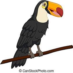Cute toucan bird on a tree branch