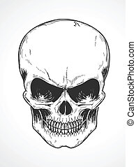 Vector illustration of detailed human skull