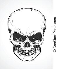 human skull - Vector illustration of detailed human skull