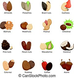 Vector illustration of different nuts. Vector set isolate