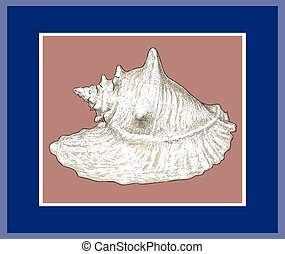 Vector illustration of drawn big seashell in decorative frame