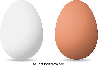 vector illustration of eggs on white background