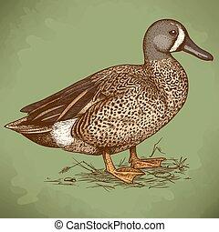 illustration of engraving duck