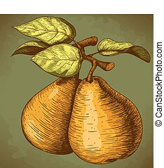 vector illustration of engraving pear and leaf on the branch in retro style