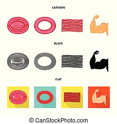 Vector illustration of fiber and muscular logo. Set of fiber...