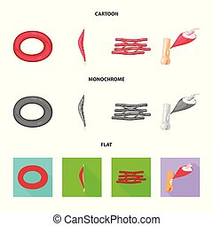 Vector illustration of fiber and muscular symbol. Set of fiber and body stock symbol for web.