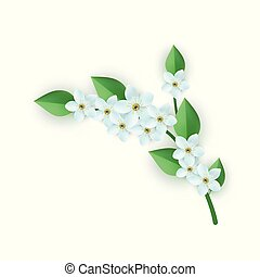 Vector illustration of floral composition with branch of white flowers with green leaves.
