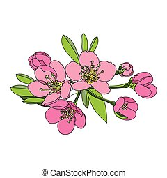 flowers fruit tree - apple, cherry or apr - vector...