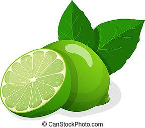 Vector illustration of fresh limes