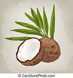 Vector illustration of fruit coconut