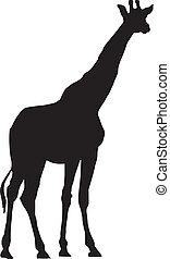 Giraffe - vector illustration of Giraffe on white background