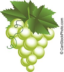 Vector illustration of grapes