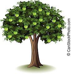 Green apple on apple tree