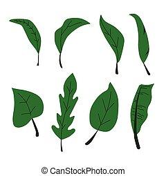 Vector illustration of green leaf graphic