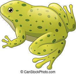 Green spotted frog isolated on white background
