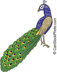 hand drawing peacock 2 - vector illustration of hand drawing...