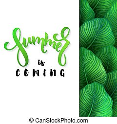 vector illustration of hand lettering poster - summer is coming with paper sheet on a background calathea leaves
