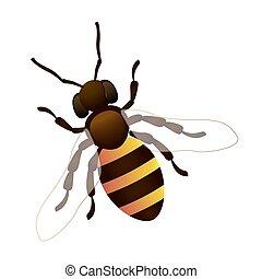 Vector illustration of honey bee on white background. EPS 10.