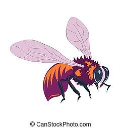 Vector illustration of honey bee on white background