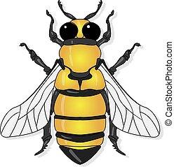 Vector illustration of honey bee on white background. .