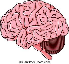 human brain cartoon - vector illustration of human brain ...