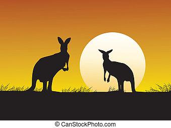 Kangaroo on the sunset background