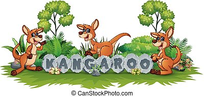 Kangaroo playing in the garden
