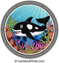 vector illustration of killer whale cartoon