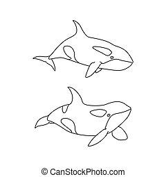 Vector illustration of killer whale set outline. Line art cartoon marine animal Orca