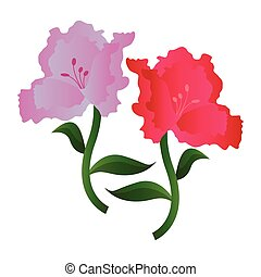 Vector illustration of lila and pink azalea flowers on white...