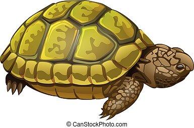 illustration of little turtle - vector illustration of...